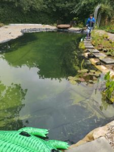 Pond is Now Clear
